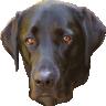 isladogs